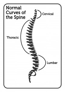 Curves of the Spine